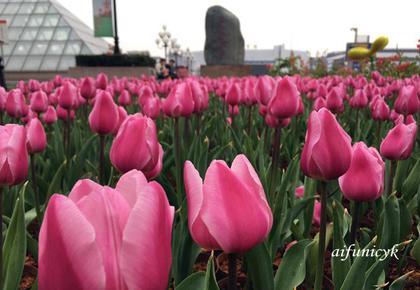 2020.1.桂林中心的早春.jpg